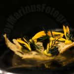 productie fotografie van food photography